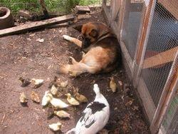 Wilma & peeps visiting Max