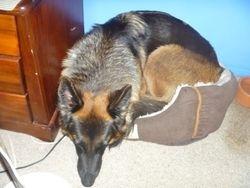 Lani snoozing in the cat basket