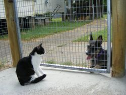 Daisy talking to Combi
