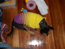 The Weather is getting cold- Combi's new jumper