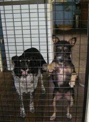Combi and Jena keeping guard