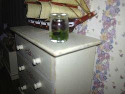Newt in a jam jar