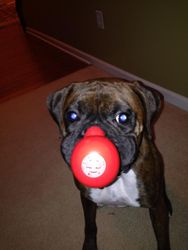 Big brother brought me a toy from the circus!