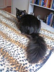 Me & my tail...  aka Moose!