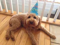 I'm two!