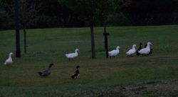 Visitors to the Easter Sunrise Service