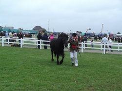 Winner at Royal Cornwall Show 2012