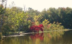 Beautiful red tree on a fall day on Scnable lake