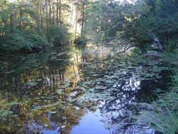 Bennett's Creek from the Gatesville park