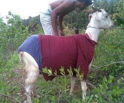 Animal Fashion Going On