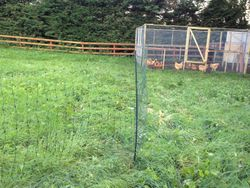 My electric poultry netting