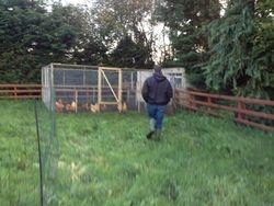 Letting them roam around the field