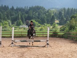 Chip schooling over fences - look at those knees!