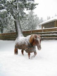 Pretty frosty pony!