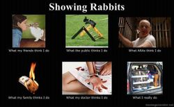 Showing Rabbits
