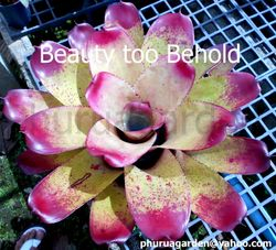 Beauty too Behold