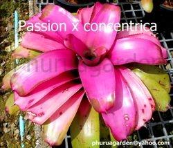 Passion x concentrica