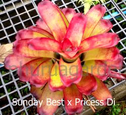 Sunday Best x princess Di