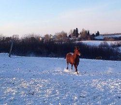 Lucky dans la neige