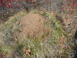 Huge Ant HIll