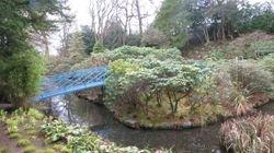Johnson Garden 1