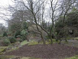 Johnson Garden 4