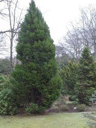 Johnson Garden 5