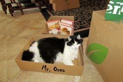 Mr. Oreo