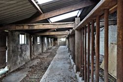 Abandoned Cow Farm R