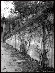 Abandoned Hospital Garden012