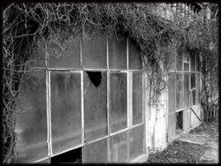 Abandoned Hospital Garden013