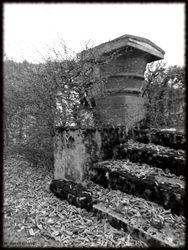 Abandoned Hospital Garden014