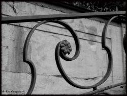 Abandoned Hospital Garden020