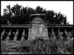 Abandoned Hospital Garden021