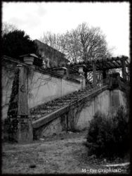 Abandoned Hospital Garden022