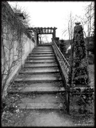 Abandoned Hospital Garden023