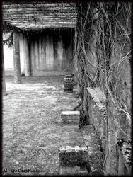 Abandoned Hospital Garden025