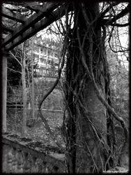Abandoned Hospital Garden026