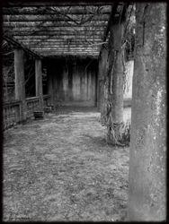 Abandoned Hospital Garden027