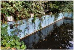 Overgrown swimming pool