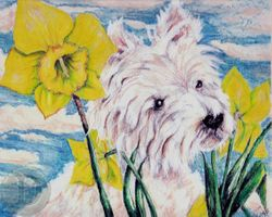 West Highland Terrier with Daffidils