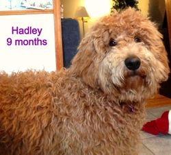Hadley at 9 Months