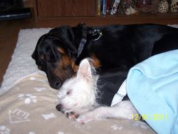 Tego and his best Buddy Eli