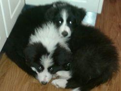 Ruby and Fergus cuddling
