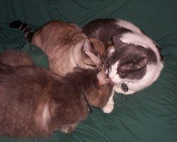 Cuddle Trio