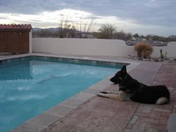 Darby (dec'd) looking over pool 2010