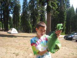 Dorst Campground with Critter - Sequoia National Park