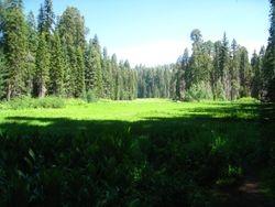 Crescent Meadow - Sequoia Park