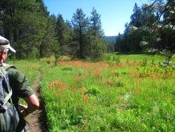 Bridalveil Meadow Hike, Indian Paintbrush & Barry