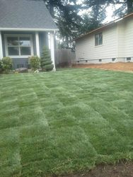 Sod in Cottage Grove